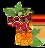 Первая витаминная компания